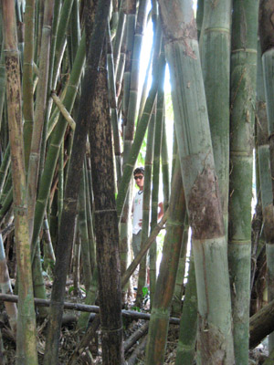 tito in the bamboo